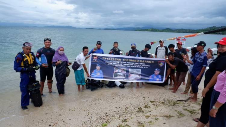 CuplikCom-KKP-Tanam-1260-Karang-Hias-Hasil-Sitaan-di-Perairan-Lombok-01022021115023-20210201_114018.jpg